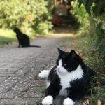 Mischi Katze & Maximilian Kater